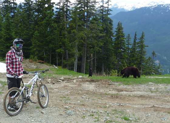 milan and bears in Whistler